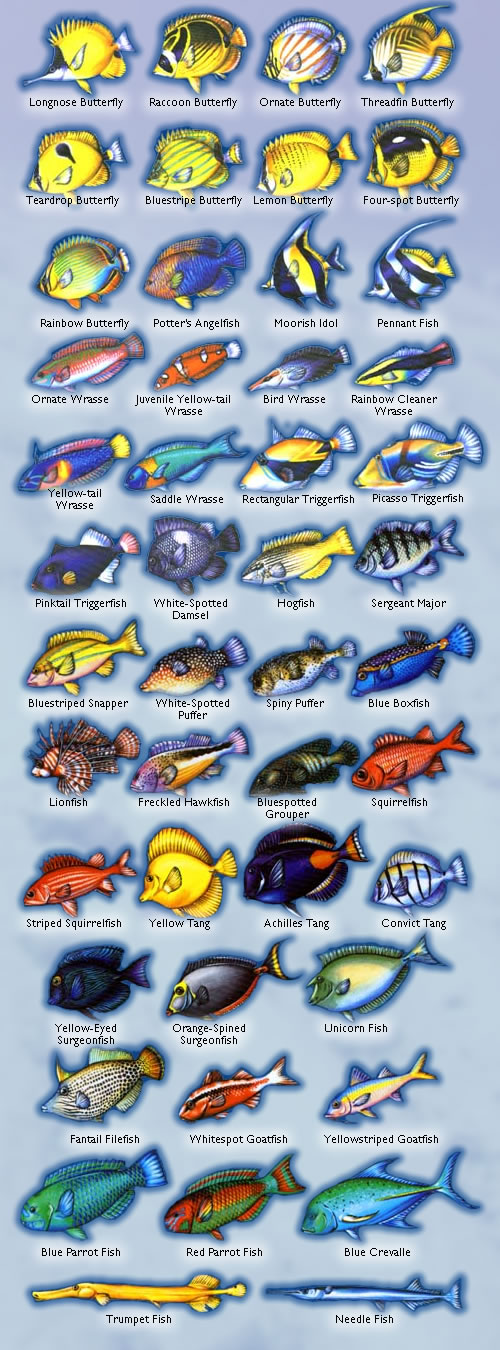 Fish Guide - names and images of some fish that can be seen in the area