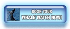 Book Your Whale Watch Now!