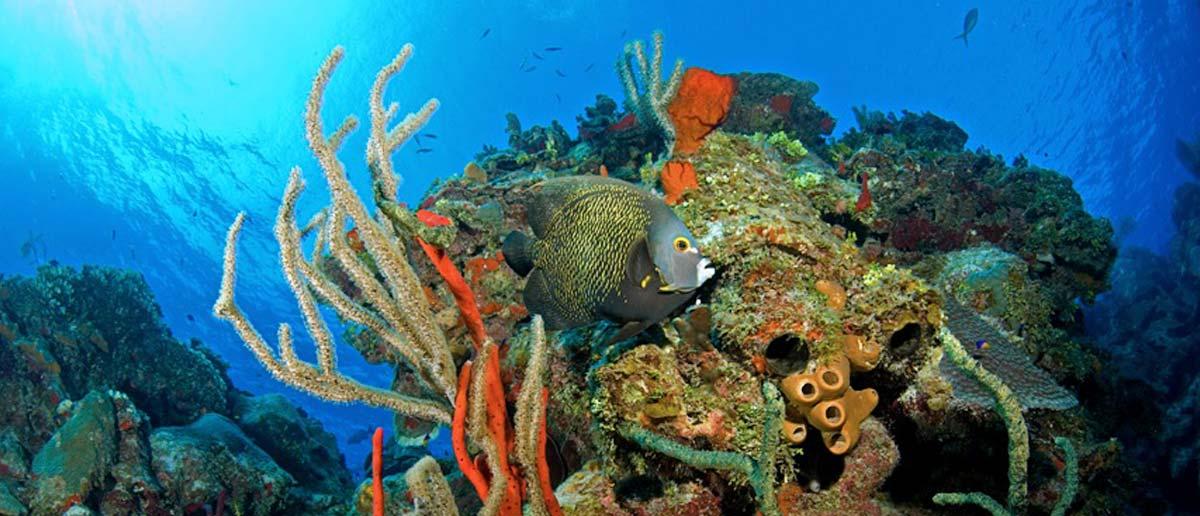 cayman diving